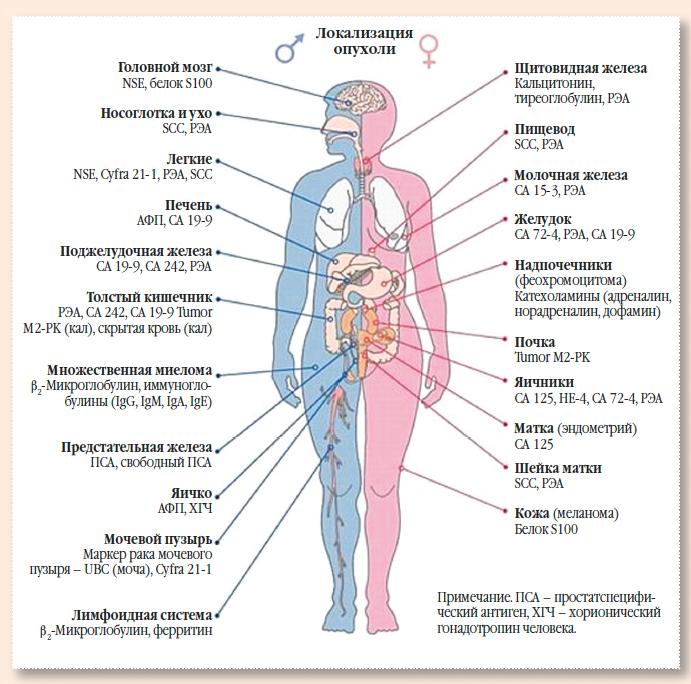 Как сделать анализы на раковые клетки 15