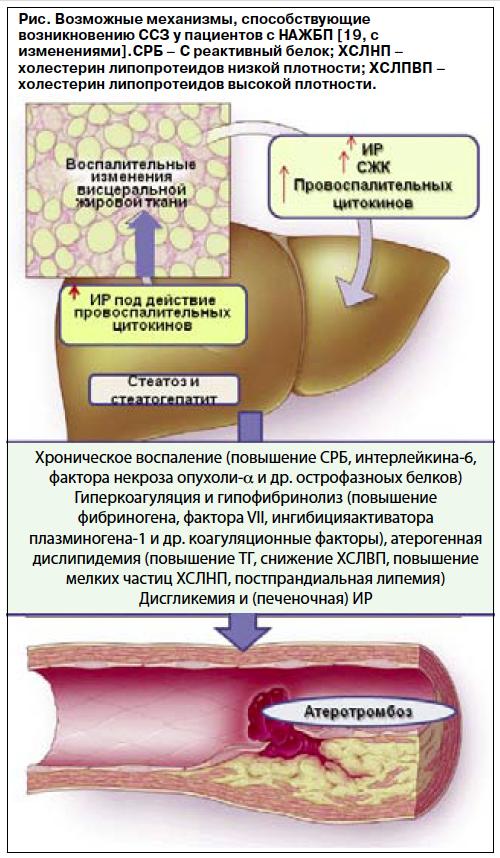Лечение диабета при гепатите