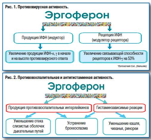 эргоферон инструкция википедия