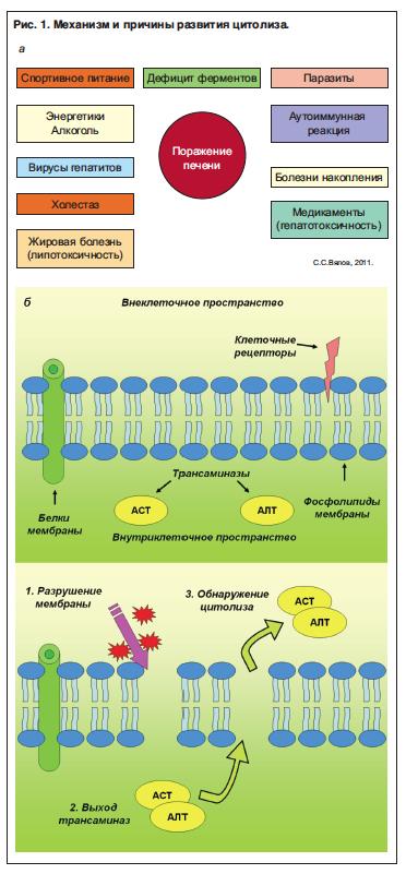 Прививка от гепатита b до какого возраста